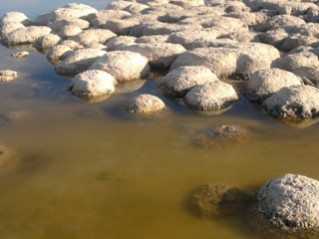 stromatalites